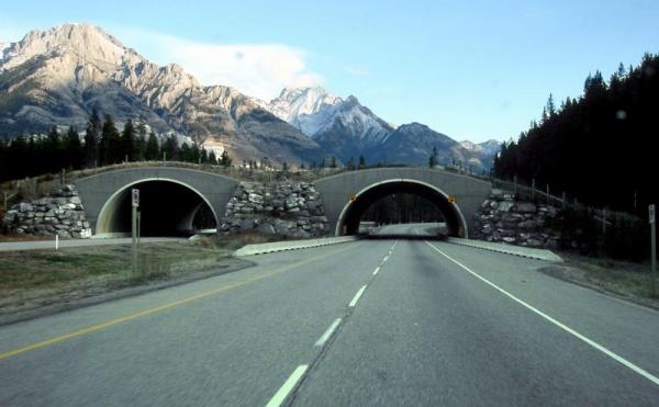 рис.4. Самые необычные и удивительные мосты мира