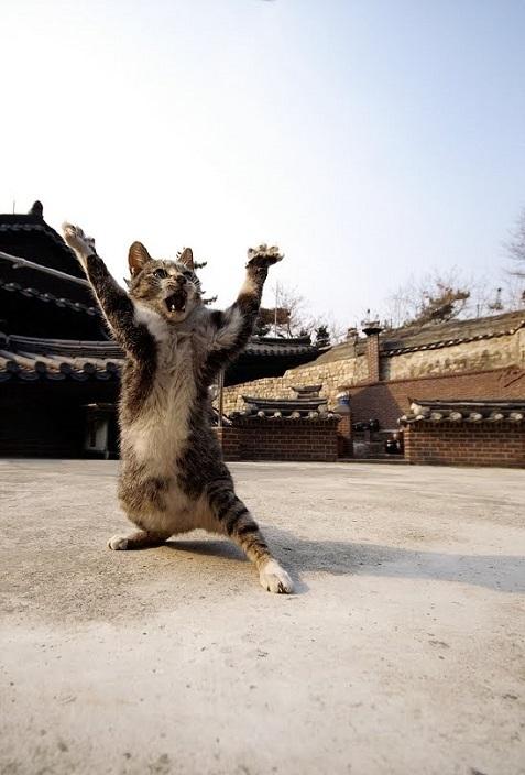 Коты или ниндзя?