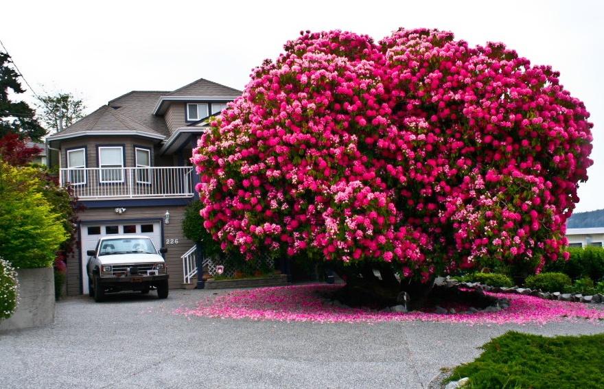 рис.5. 16 самых удивительных деревьев на планете