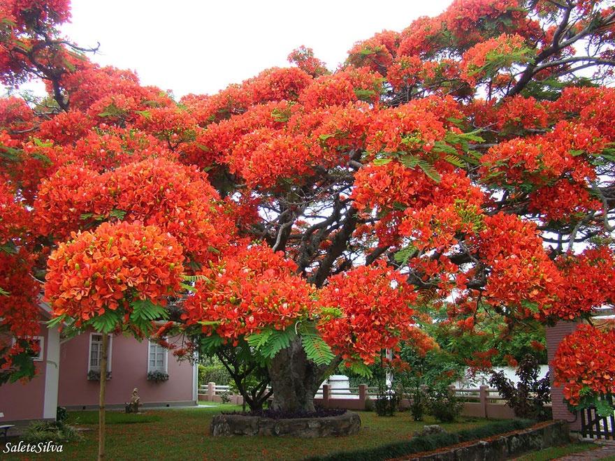 рис.20. 16 самых удивительных деревьев на планете