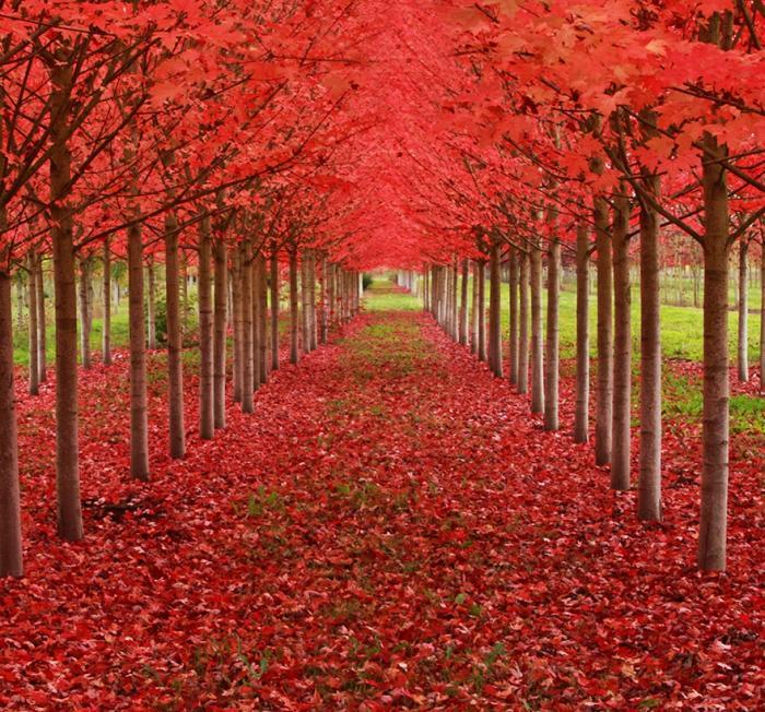 рис.16. 16 самых удивительных деревьев на планете