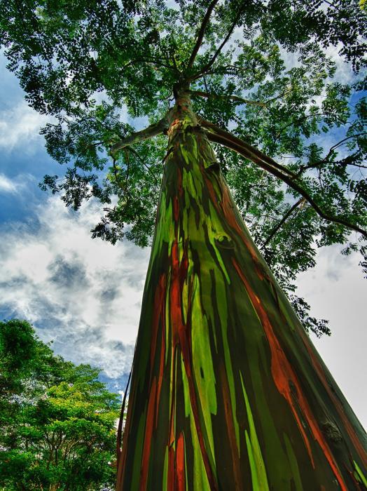 рис.15. 16 самых удивительных деревьев на планете