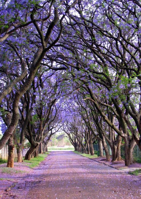 рис.3. 16 самых удивительных деревьев на планете