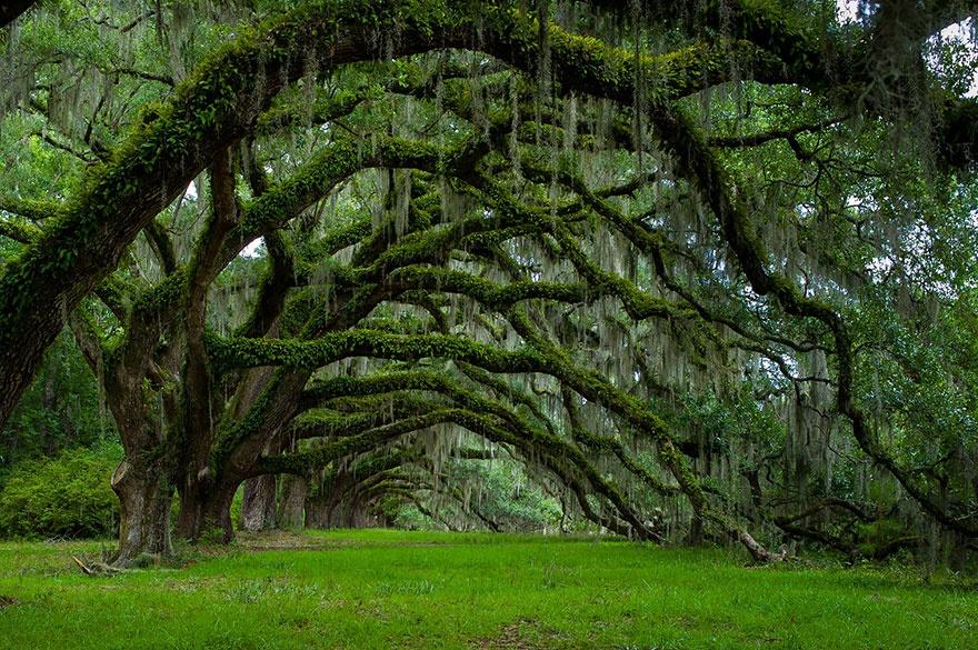 рис.19. 16 самых удивительных деревьев на планете