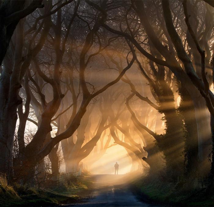 рис.12. 16 самых удивительных деревьев на планете