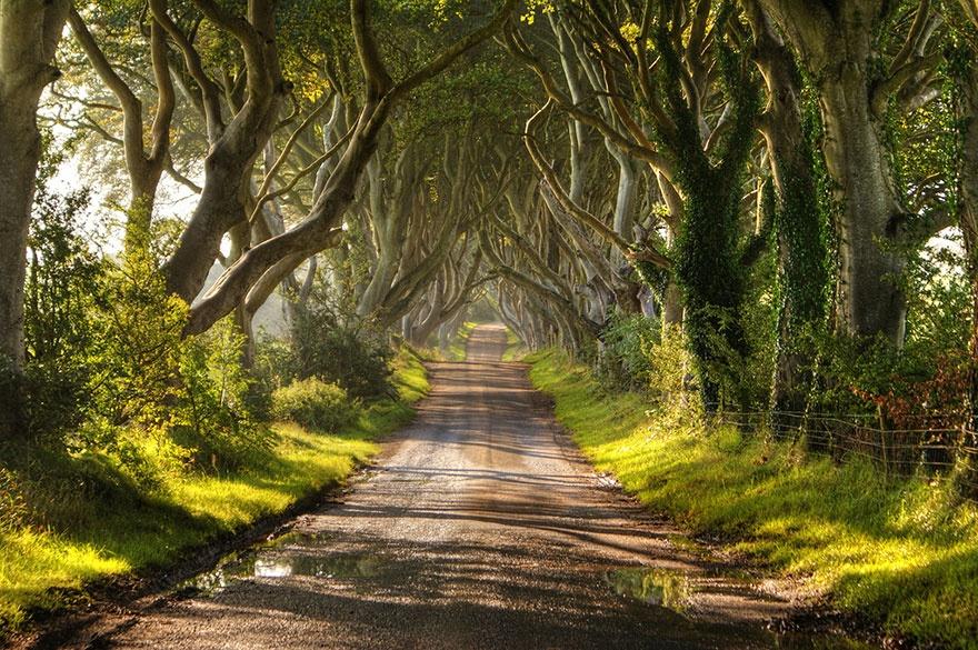 рис.10. 16 самых удивительных деревьев на планете