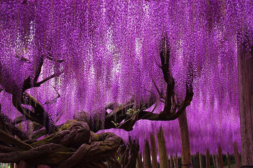рис.4. 16 самых удивительных деревьев на планете