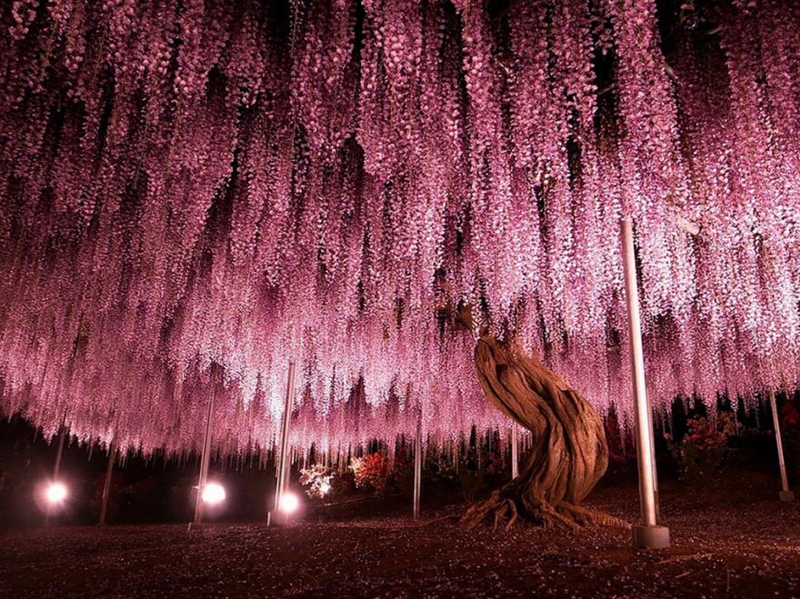 рис.9. 16 самых удивительных деревьев на планете