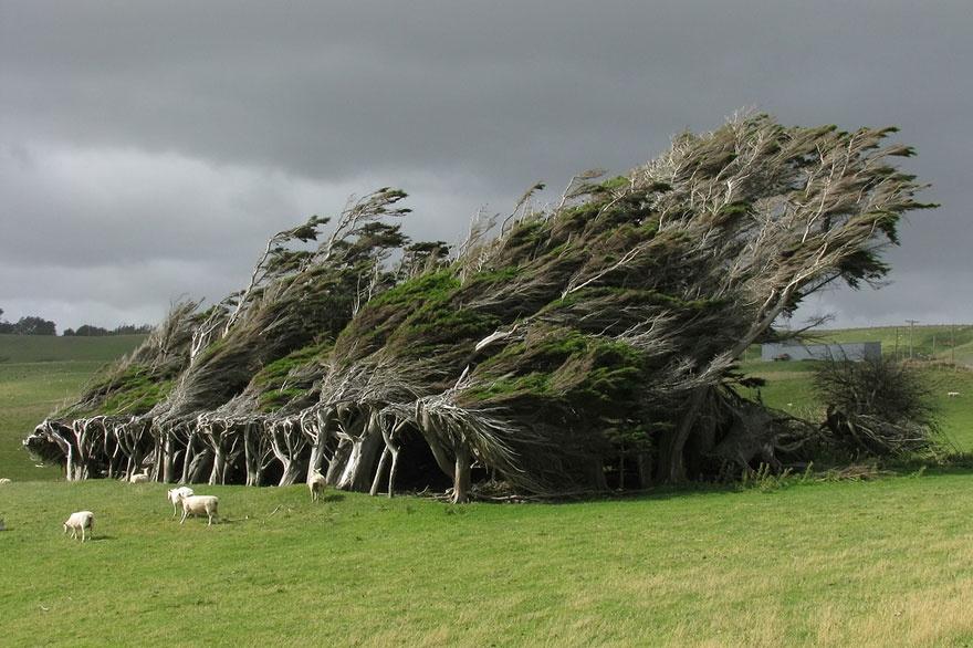 рис.1. 16 самых удивительных деревьев на планете