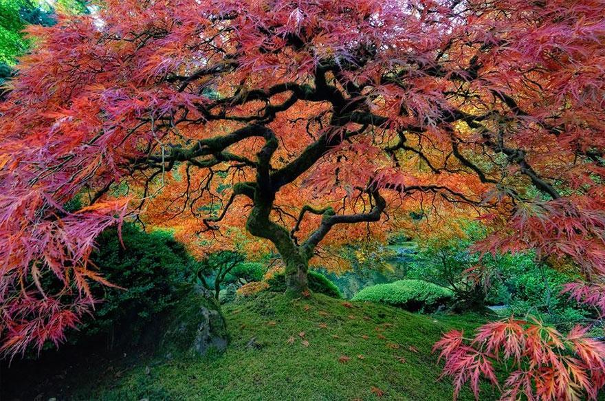 рис.8. 16 самых удивительных деревьев на планете