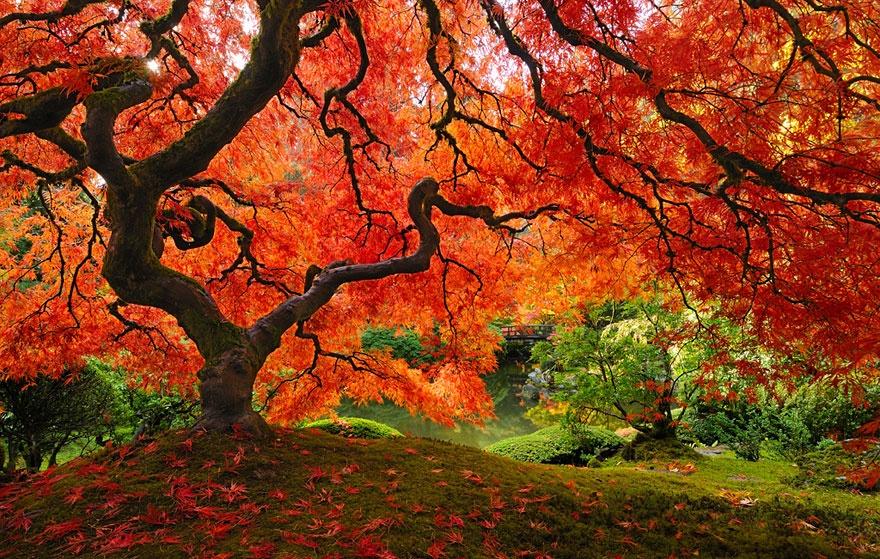 рис.13. 16 самых удивительных деревьев на планете