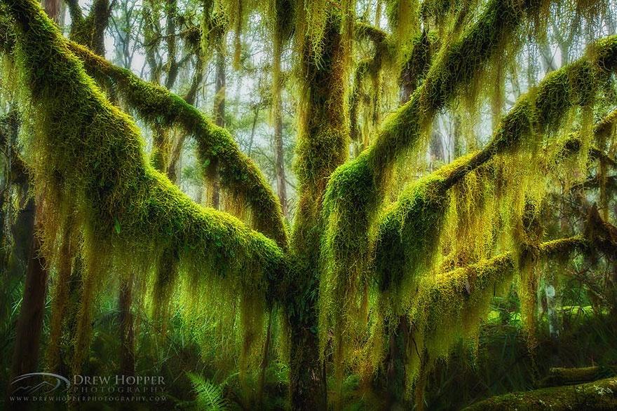 рис.18. 16 самых удивительных деревьев на планете