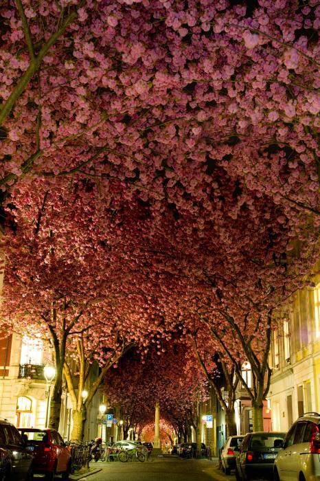 рис.11. 16 самых удивительных деревьев на планете