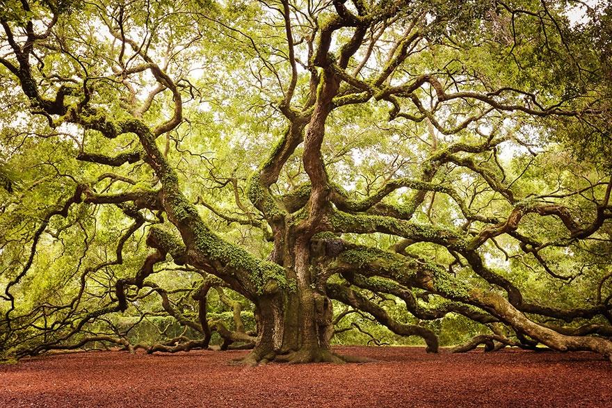 рис.7. 16 самых удивительных деревьев на планете