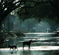 Мощь тропических ураганов: Рис.1