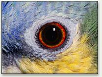 Как животные видят мир: Рис.9