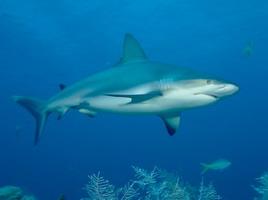 Deep Sea World известен самым длинным в Европе подводным