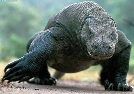 Со времен динозавров: Рис.22