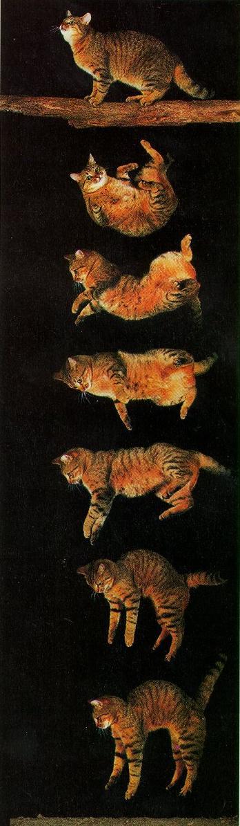 Почему у кошек девять жизней?: Рис.8