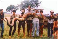 Змеи: Рис.1