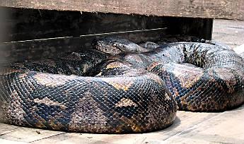 Змеи: Рис.2