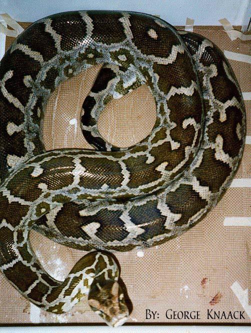 Змеи: Рис.8