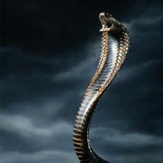 бисероплетение змея кобра.