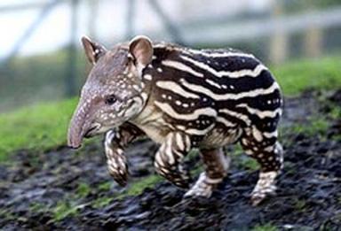 Странные животные: Рис.5