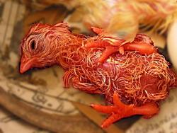 Рождение цыпленка: Рис.6