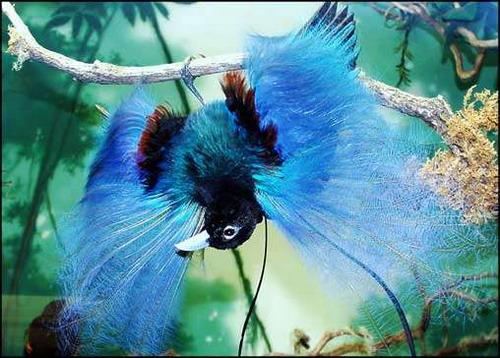 DataLife Engine Версия для печати Тропические птицы.