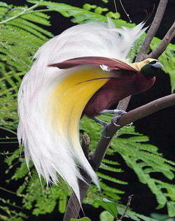 Фото находится также в каталоге: дрофа птица фото, урал