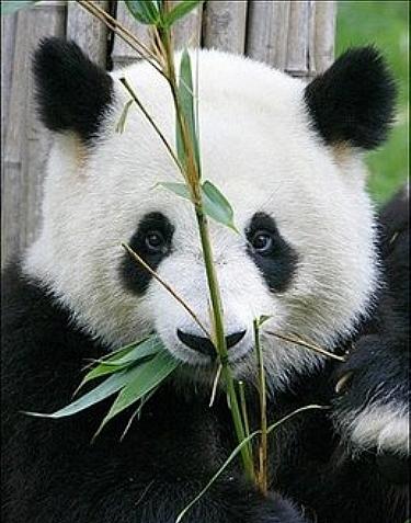 Панды: Рис.30