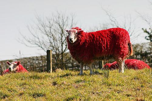 Окрашенные овцы: Рис.2