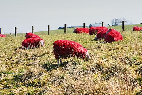 Окрашенные овцы: Рис.3