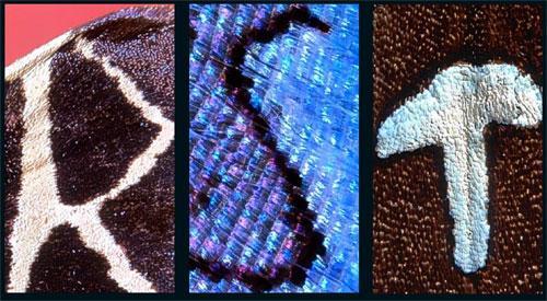 Алфавит  бабочки: Рис.2