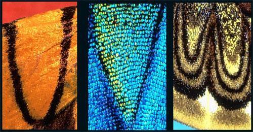 Алфавит  бабочки: Рис.3