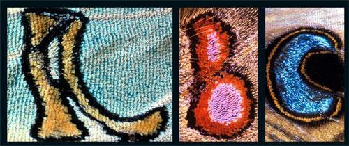 Алфавит  бабочки: Рис.4