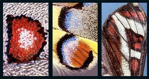 Алфавит  бабочки: Рис.5