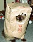Коты в мешках