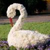 Скульптуры и фигуры из цветов