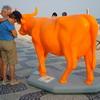 Пластиковые коровы