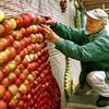 Яблочные картины