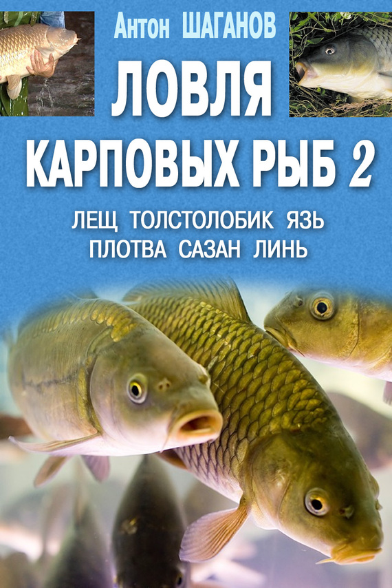Ловля карповых рыб – 2