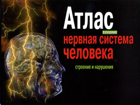 Нервная система человека. Строение и нарушения