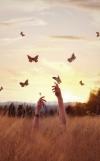 Ловля бабочек. Дорога осознания
