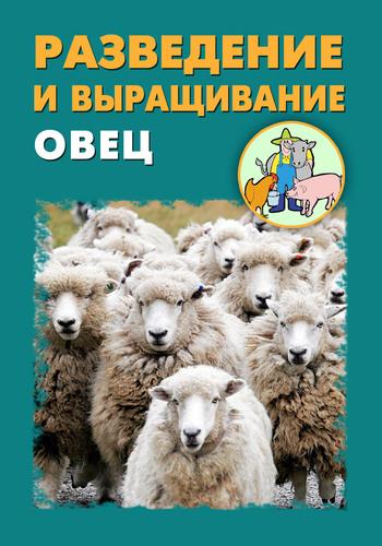 Разведение и выращивание овец