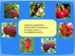 Загадки про ягодки