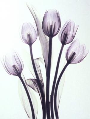 Это рентгеновские снимки обычных цветов.  Размещено с помощью приложения.  Я - фотограф.