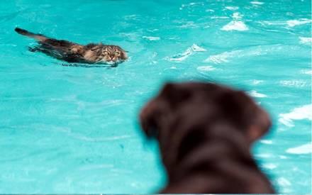 Кошки в воде и под водой: Рис.3