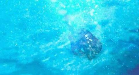 Кошки в воде и под водой: Рис.5